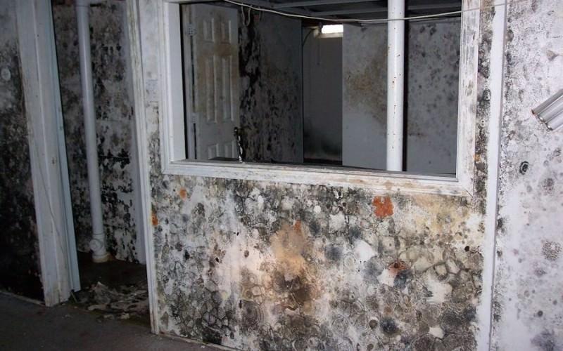Черная плесень по всем стенам