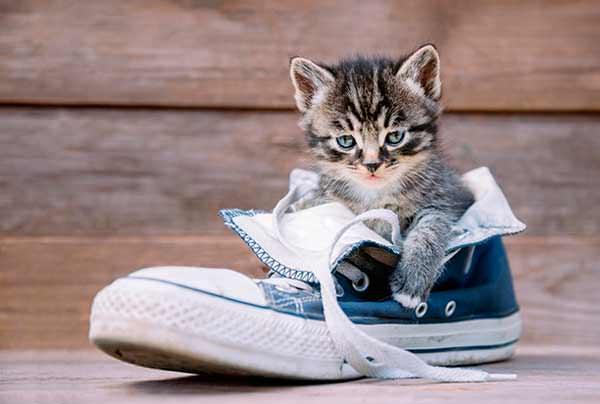 Котенок сидит в ботинке
