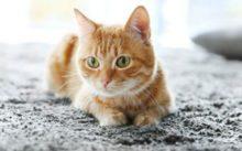 Средства для выведения запаха кошачьей мочи