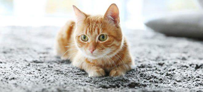 Рыжая кошка на ковре