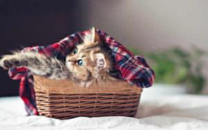 Котенок лежит в корзине