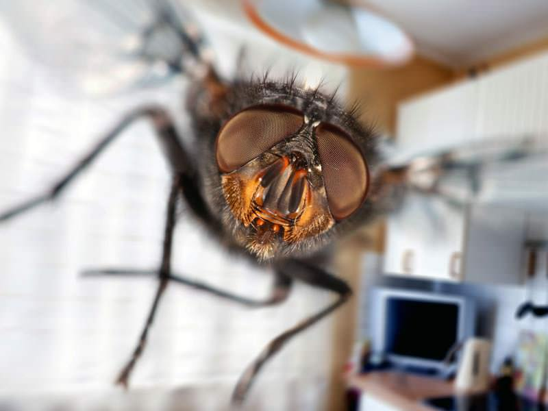 Летающая муха