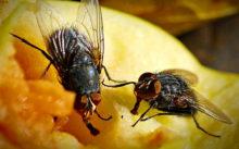 Обзор эффективных средств от мух в доме