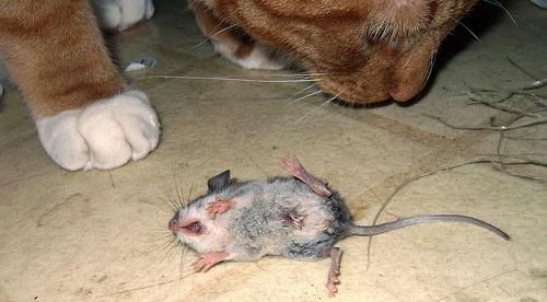 Кошка с пойманной мышкой