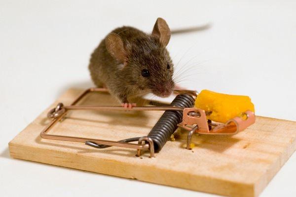 Мышка в мышеловке