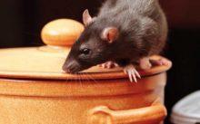 Мышка на кастрюле