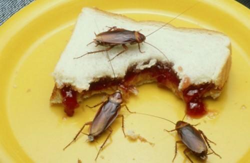 Тараканы в тарелке