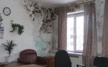 Как выбрать средство от плесени и грибка на стенах
