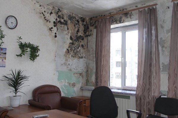 Средство от плесени и грибка на стенах в квартире: какое антигрибковое и противогрибковое антисептическое средство лучшее против грибковых колоний