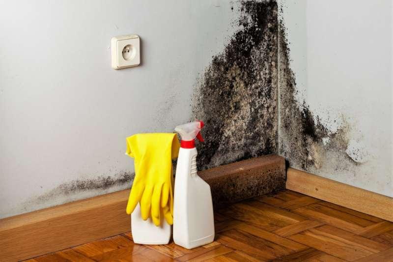 Топ 5 средств от плесени и грибка на стенах квартиры