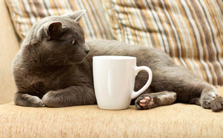 Кошка и кружка на диване