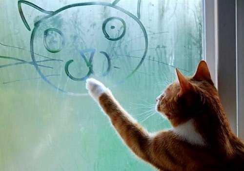 Рисунок кошки на запотевших окнах