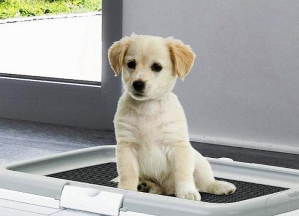 Как приучить щенка к туалету в квартире