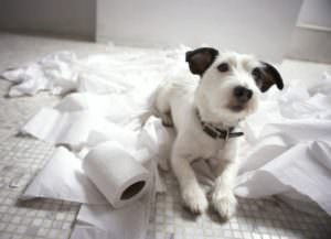 Собака на туалетной бумаге