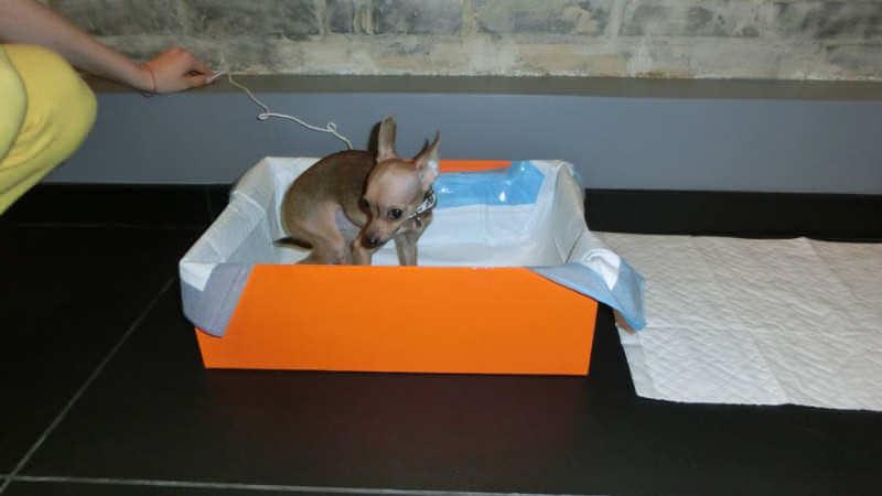 Собачка в коробочке с пеленкой