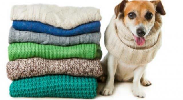 Сложенные свитера и собака