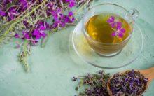 Сколько можно и как правильно собирать и хранить иван - чай